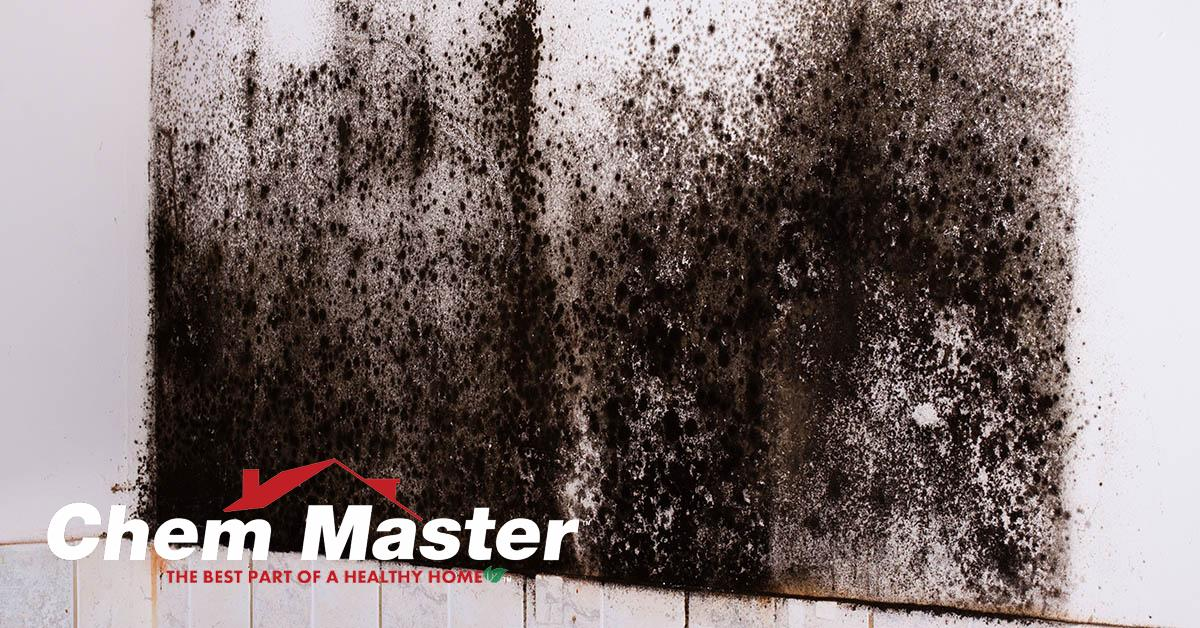 Certified Mold Remediation in Chippewa Falls, WI