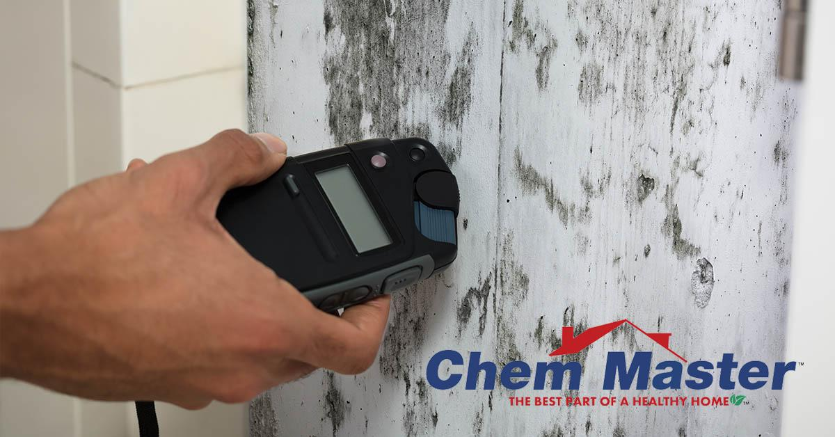 Professional Mold Removal in Chippewa Falls, WI