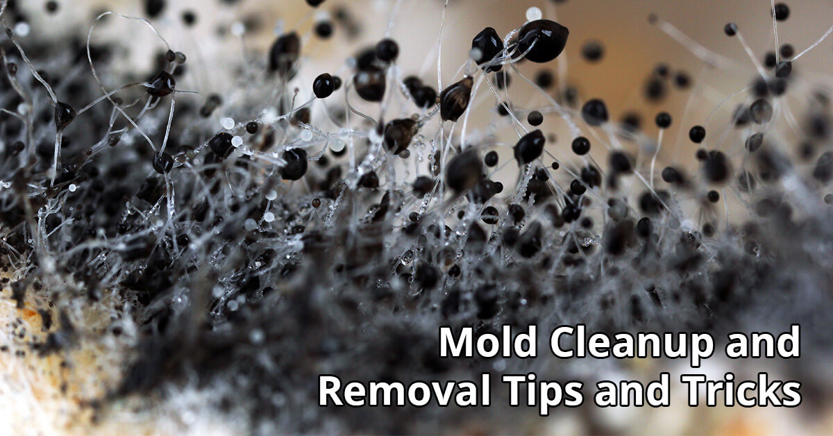 Mold Damage Restoration Tips in Bloomer, WI