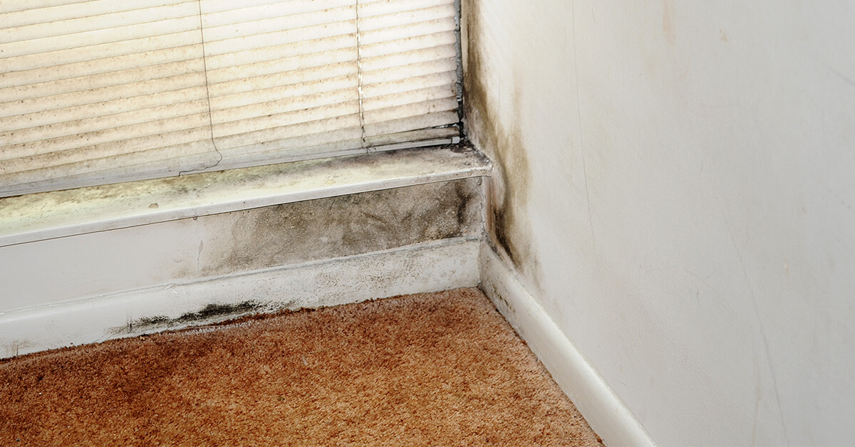 Certified Mold Damage Restoration in Eau Claire, WI