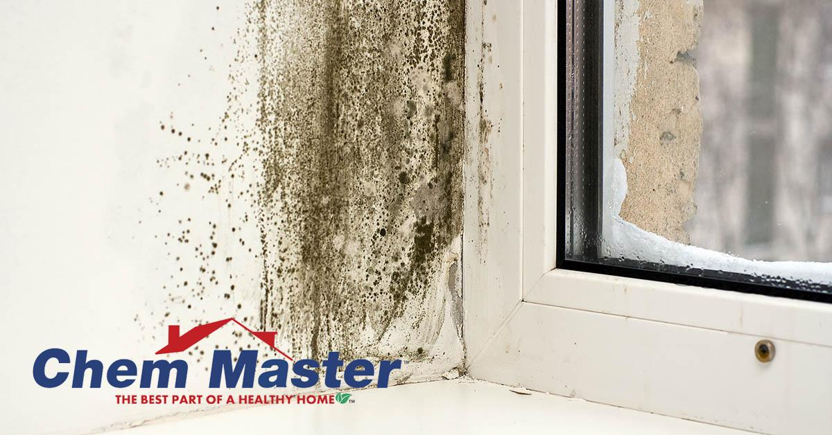 Professional Mold Removal in Osseo, WI