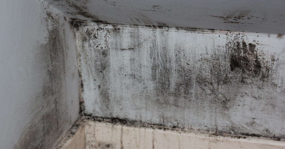Certified Mold Removal in Stanely, WI