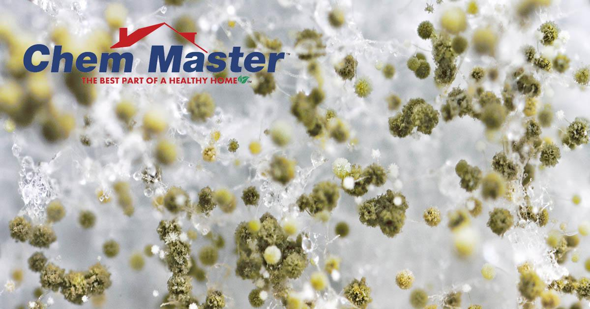Professional Mold Remediation in Chetek, WI