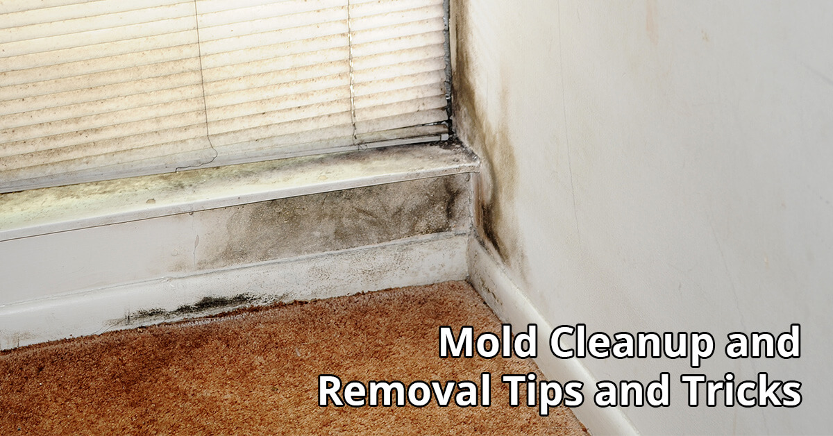 Mold Removal Tips in Osseo, WI