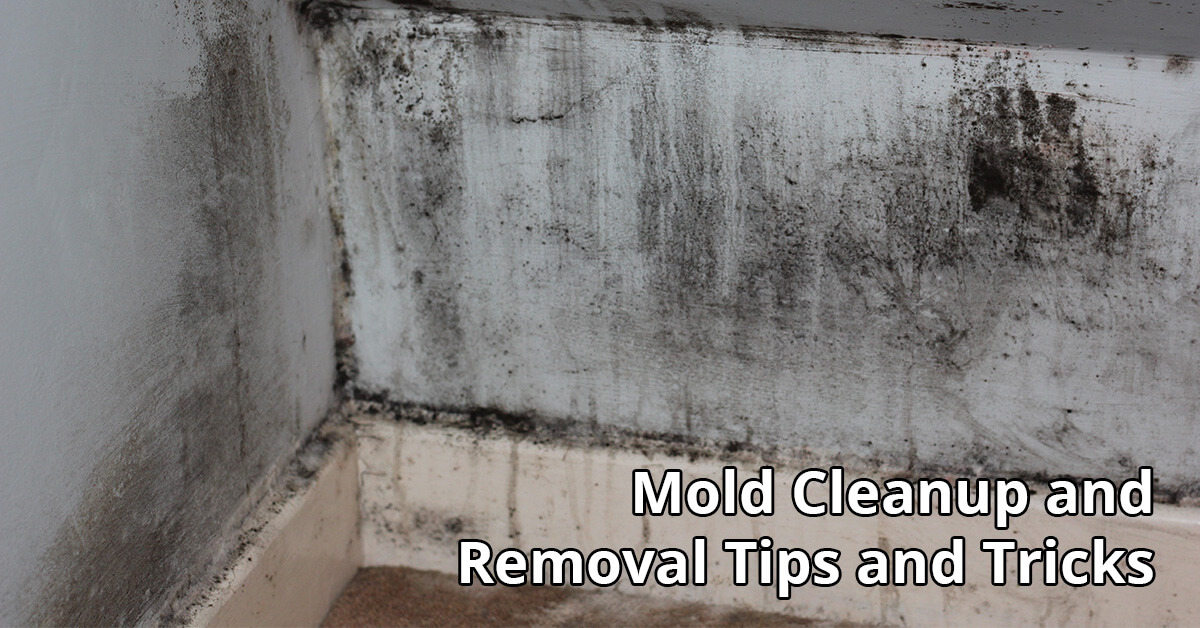 Mold Removal Tips in Elk Mound, WI
