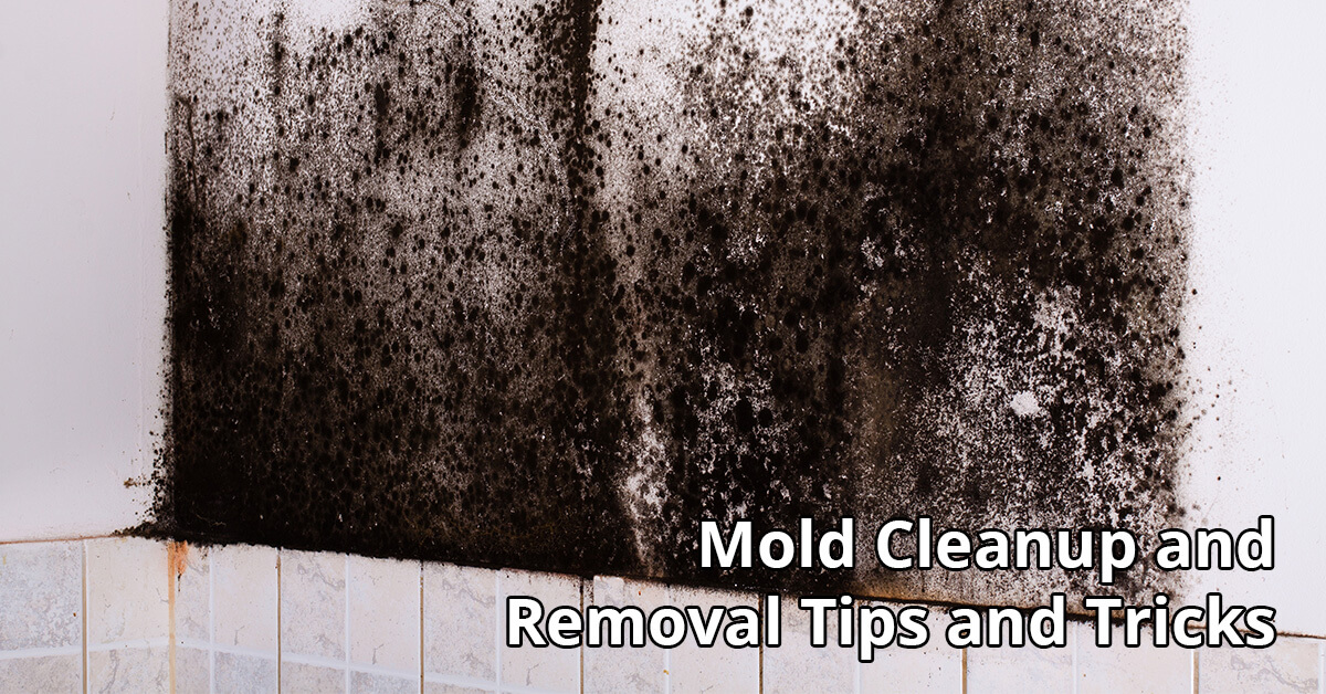 Mold Removal Tips in Cadott, WI