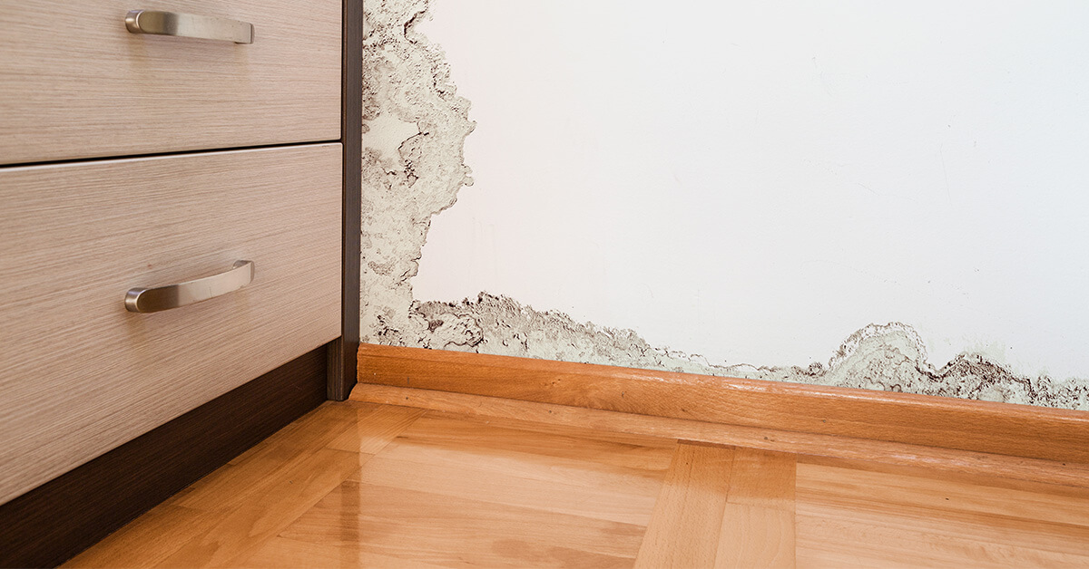 Professional Mold Removal in Rice Lake, WI