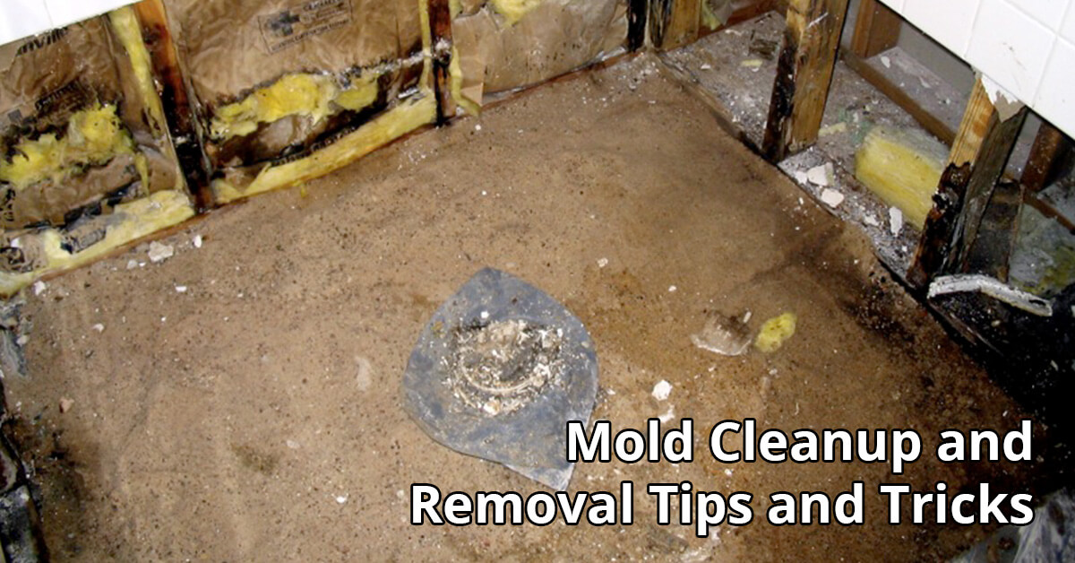 Mold Abatement Tips in Cadott, WI