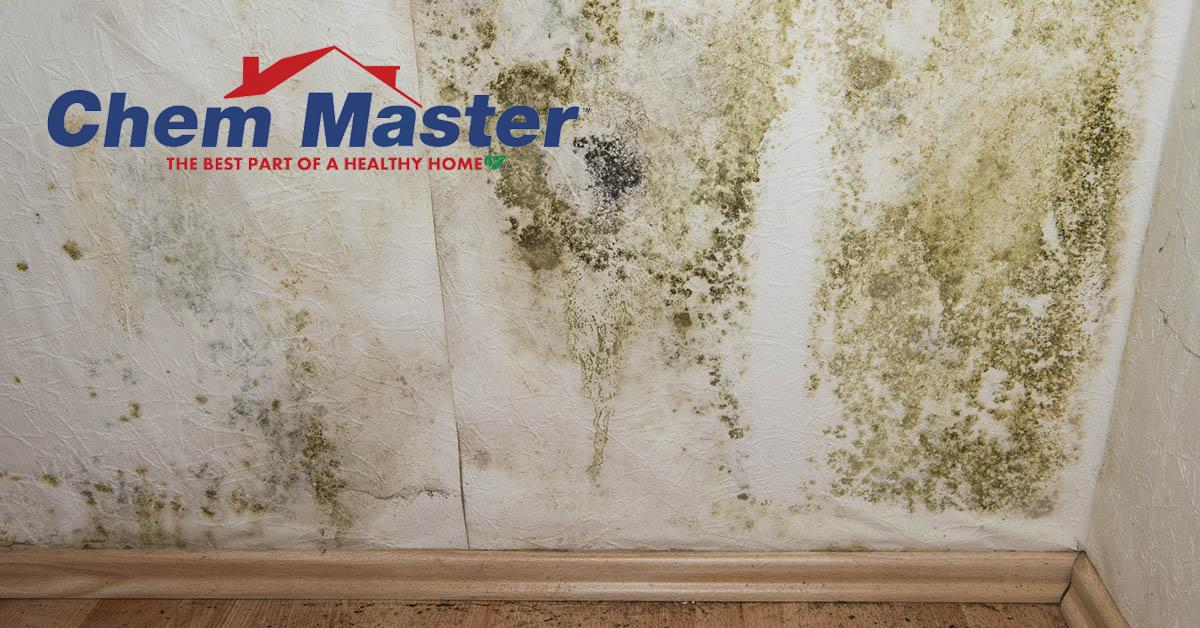 Certified Mold Mitigation in Chippewa Falls, WI