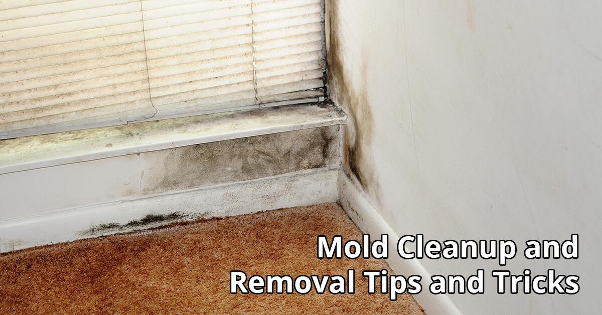 Mold Mitigation Tips in Chetek, WI