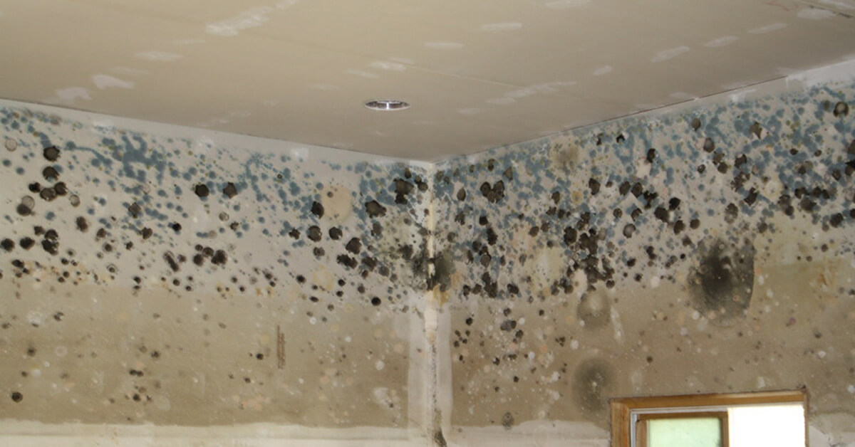 Certified Mold Remediation in Altoona, WI