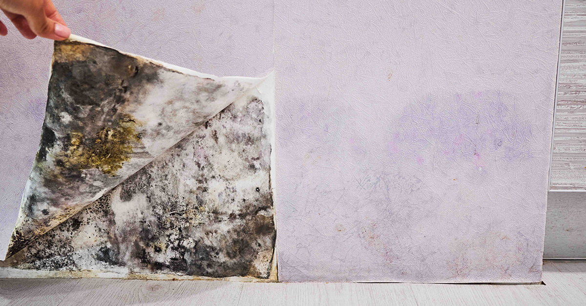 Certified Mold Removal in Osseo, WI